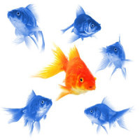 common app essay help - an image of a fish that stands out among the other fish