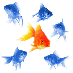 image of a fish standing out in the crowd of all other college application essays